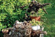 Při rekonstrukci zahrady se někdy musí odstranit starší stromy. Kořeny však mohou zůstat a zdobit zahrádku dál.