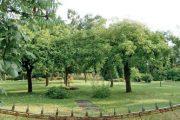 Jednoduché řešení v podobě pečlivě udržovaného trávníku a staré studny, kterou obklopují jabloně.