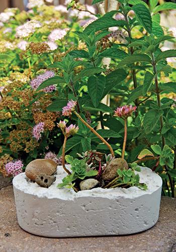 Do květináče můžete zasadit třeba skalničky.