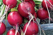 V hlubších prostornějších truhlících vypěstujete i zeleninu.