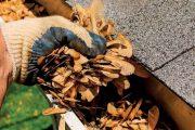 Napadané listí spolu s dalšími nečistotami musí ze žlabů pryč. Nejprve ho vyndejte ručně, pak ještě systém propláchněte vodou.