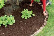 """Pozor na hustou výsadbu, rostliny během let """"naberou objem""""."""