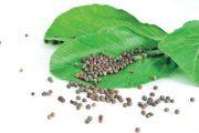 Některé druhy zeleného hnojení potřebují dost času