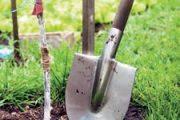 Říjen je ten nejlepší termín z celého roku pro výsadbu okrasných i ovocných stromků.