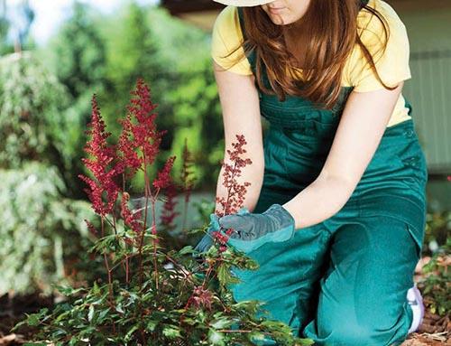 Pro práci na zahradě byste měli mít připraveno několik druhů rukavic. Na pletí se hodí pogumované, na stříhání růží kožené a na držení motyky látkové.
