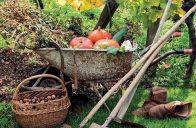 Podzim na zahradě je plný práce, která začíná sklizní a končí přípravou výsadeb na zimu.