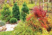 Před zimou zpevněte úvazkem koruny dřevin, které mají tendenci se rozklesávat.
