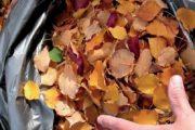 Listí a další sebraný bioodpad jsou ideálním materiálem ke kompostování.