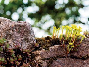 S kamennými prvky si výborně sednou suchovzdorné rostliny