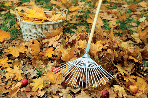 Na každém trávníku poznáte, jak intenzivně se o něj majitel stará.