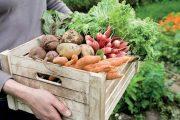 Plody ze záhradky jsou vždy lepší než z obchodu.