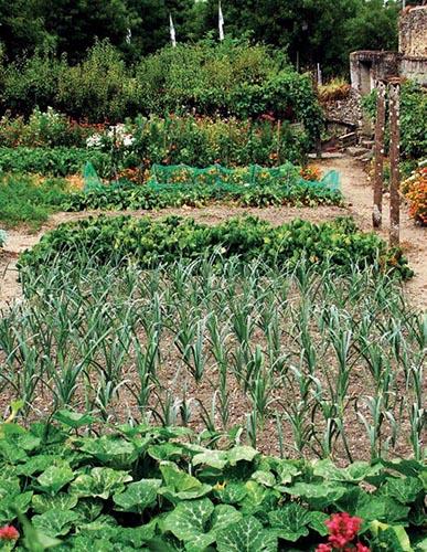 V užitkové zahradě se snažte o co největší druhovou pestrost.