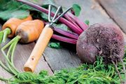 O zeleninu je nutné se dobře starat.