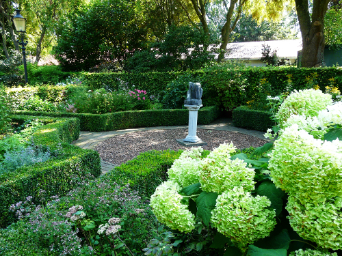 Svetle zelenkave kvety jsou typicke pro Hydrangea arborescens