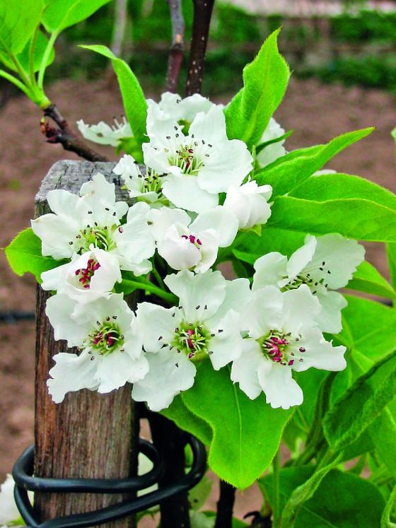 Kvety - azijskahruska