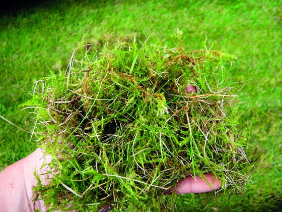 Plsť bývá častým zdrojem houbových chorob.