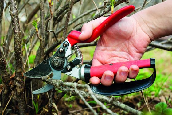 Nůžky využijete na úpravu keřů a budete jimi sestříhávat i suché trvalky.