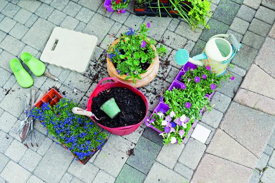 Balkonovky potřebují zeminu, která se nebude během sezóny sléhat.
