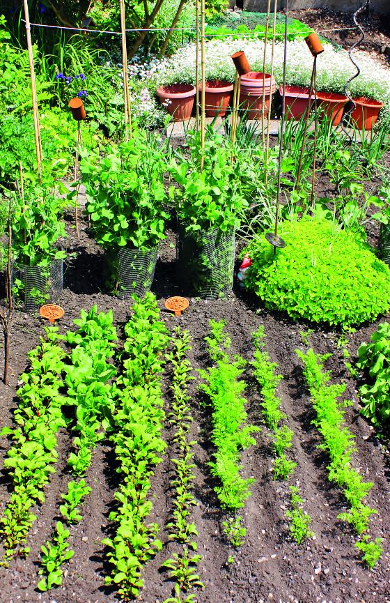 Zelenina potřebuje kvalifikované zásahy pěstitele ve správný čas.
