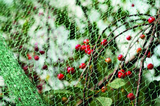 Lehká síť chrání úrodu před nálety nenechavých ptáků.