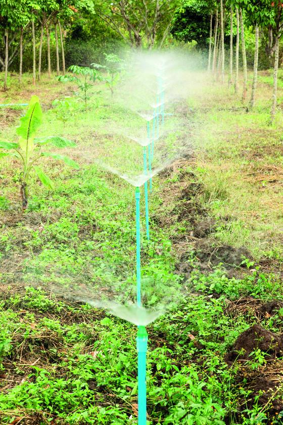 Potrubí pod povrchem je po určitých délkách osazené kapkovači.