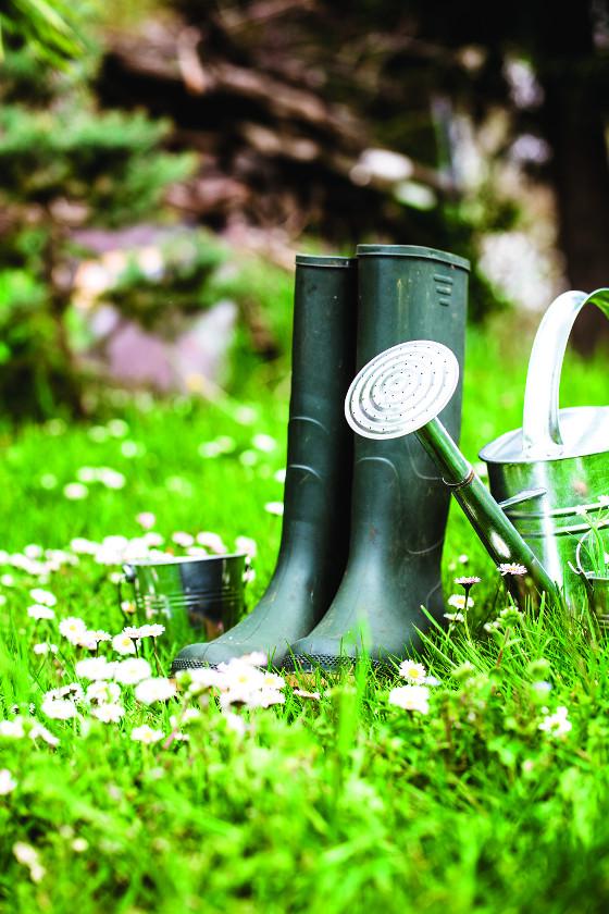 Méně starostí s péčí o trávník budete mít v případě, když místo něj vysejete květinovou louku