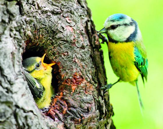 Přirozeným nepřítelem škůdců v zahradě je ptactvo
