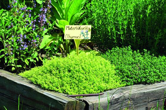 Tématické záhony vám představí bylinky užívané při různých obtížích
