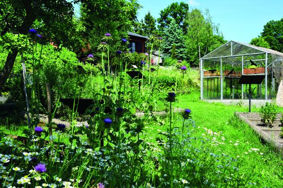 Nedaleko babiččiny zahrádky najdete i zeleninové záhony a skleníky