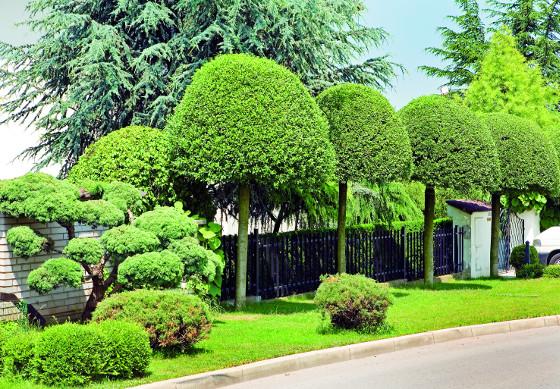 Že nevcházíte do obyčejné zahrady naznačují už pečlivě tvarované višně křovité u vstupu.