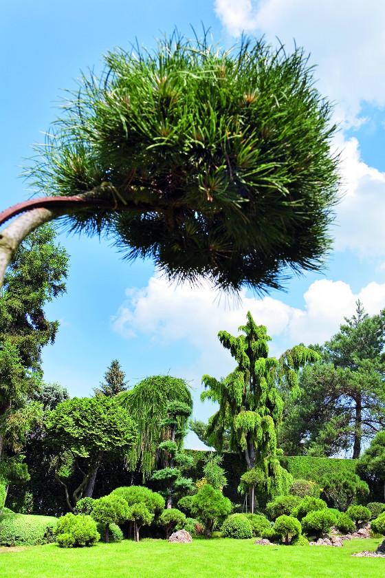 Nejstarším stromům je už více než padesát let.