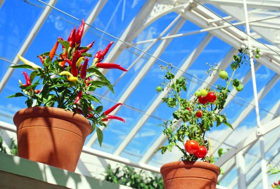 Na konci léta se skleníky stávají útočištěm i pro teplomilné rostliny v květináčích.