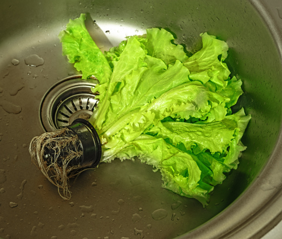 Green salad in a pot in the sink