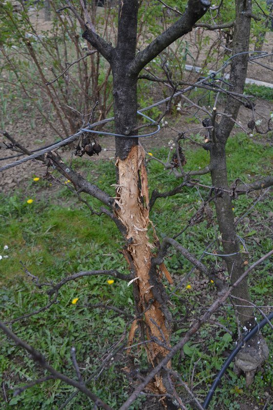 Problémy se stromovým kroužkem