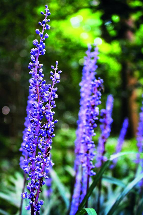 zřejmé tipy na pěstování rostlin