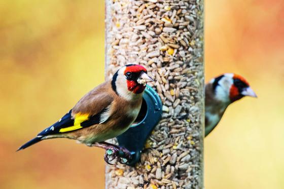 Sklenice velké ptáky