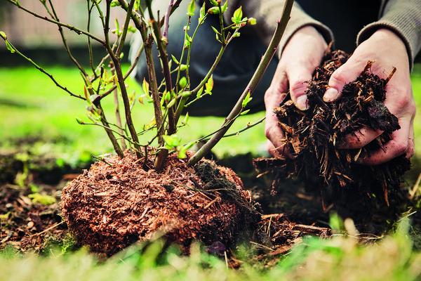 Мингорисполком приглашает жителей столицы высаживать во дворах деревья и кустарники